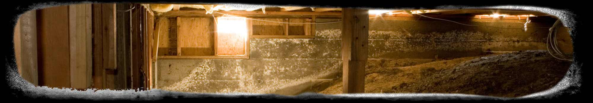 Bloom Crawl Space Services