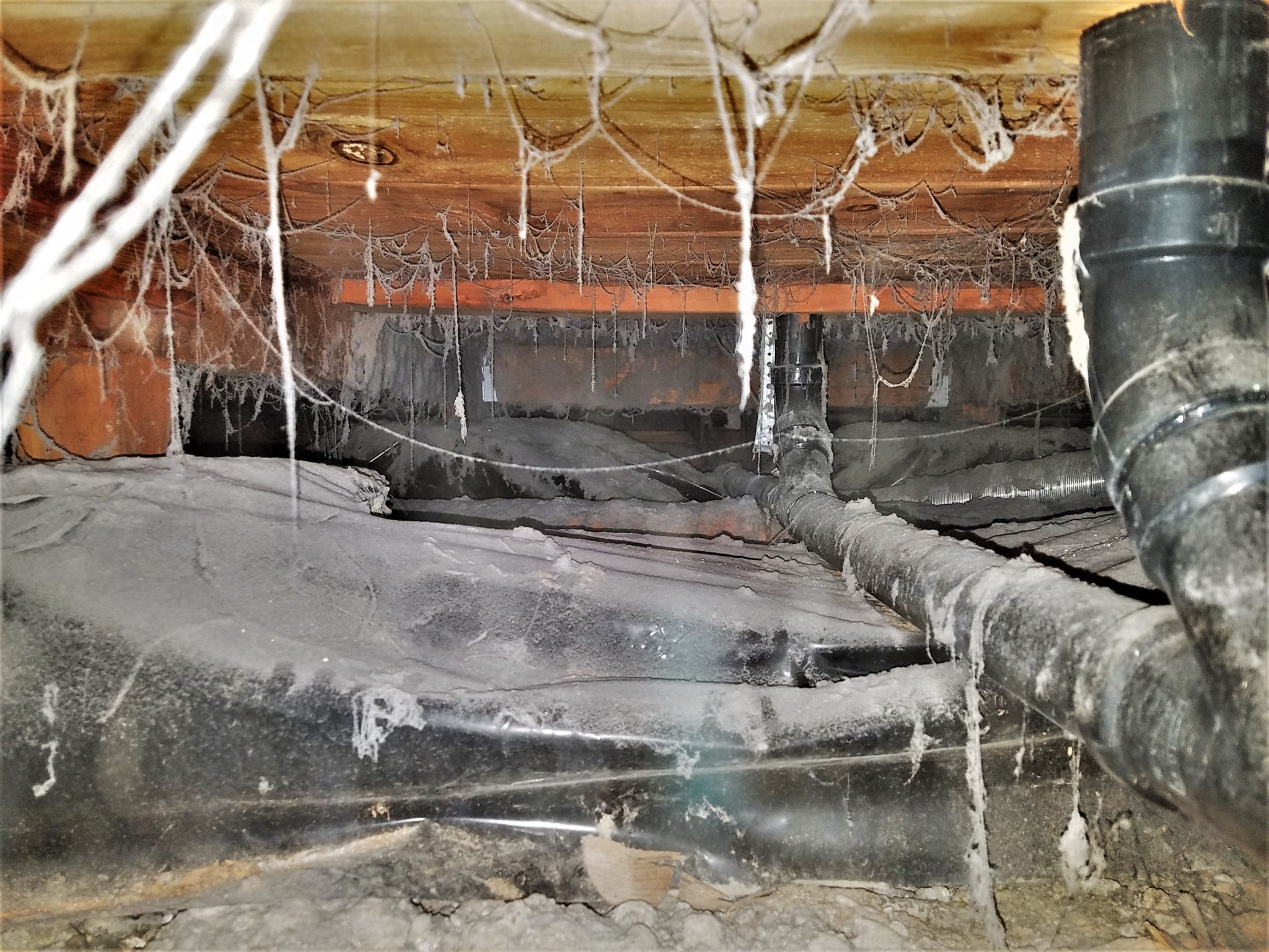 bloom crawl space services, bloom pest control, bloom home services, crawl space services portland, crawl space services